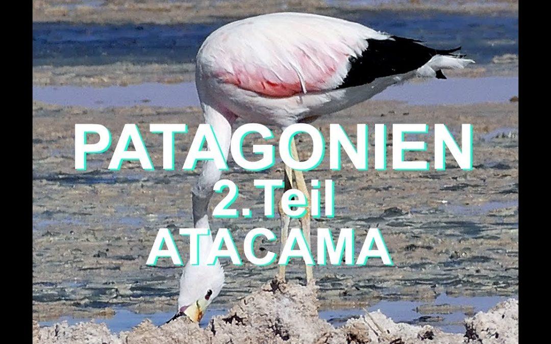 PATAGONIEN 2.Teil ATACAMA – Hochlandlagunen und Flamingos
