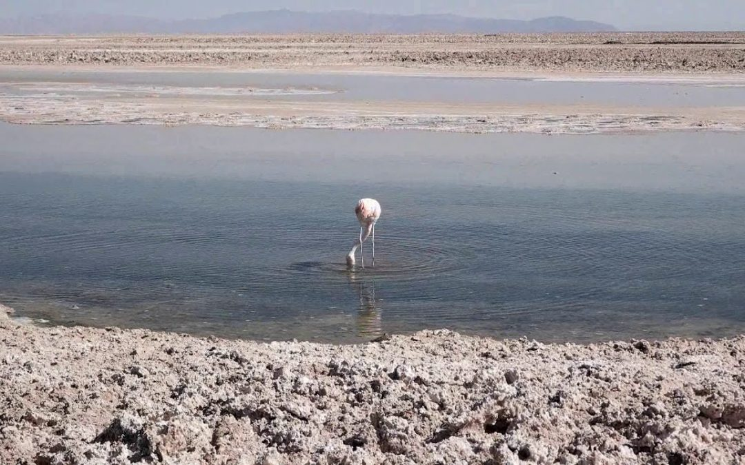 ▣【Korean Backpacker】San Pedro de Atacama Salt Flats & Flamingos ,Chile –칠레 산페드로데 아타카마 소금밭 & 플라밍고