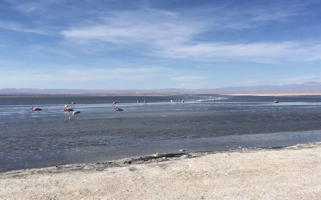 Salar de Atacama mit Flamingos