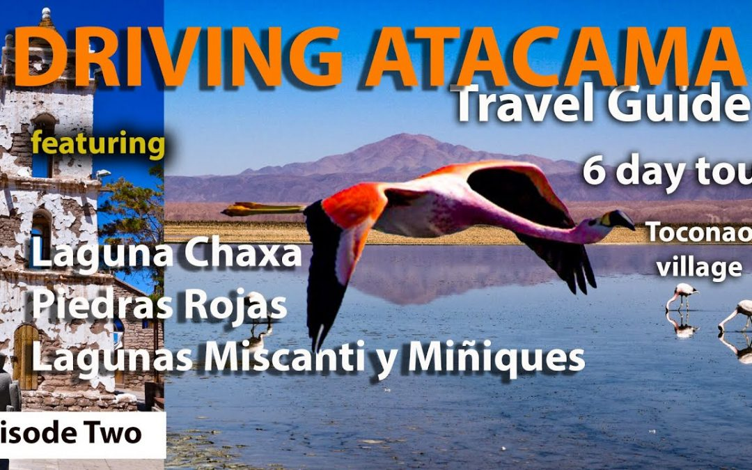 The Stunning wildlife at LAGUNA CHAXA | Flamingos (Part2) San Pedro de Atacama Desert